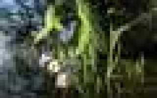 Выживание в дикой природе. Съедобные водоросли