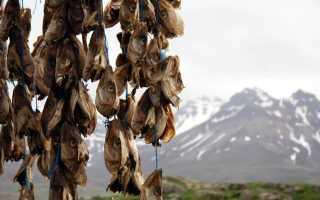 Хардфискур — сушеная рыба по рецепту викингов