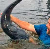 Ловля рыбы без удочки