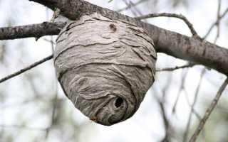 Осы и шершни — как избавиться от осиного гнезда