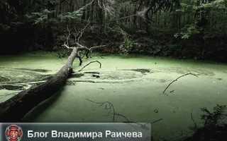 Как выбраться, если засосало в трясину на болоте