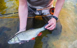 Старинные способы рыбалки, их плюсы и минусы