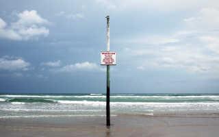 Морские обитатели Черного моря, которых нужно опасаться