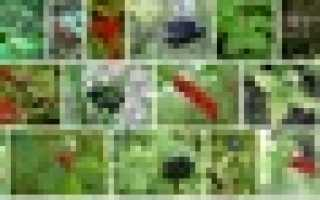 10 самых распространенных ядовитых лесных ягод