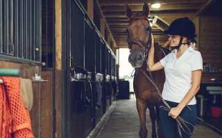 Содержание лошадей. Популярные заблуждения